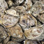 Tillamook County Oysters