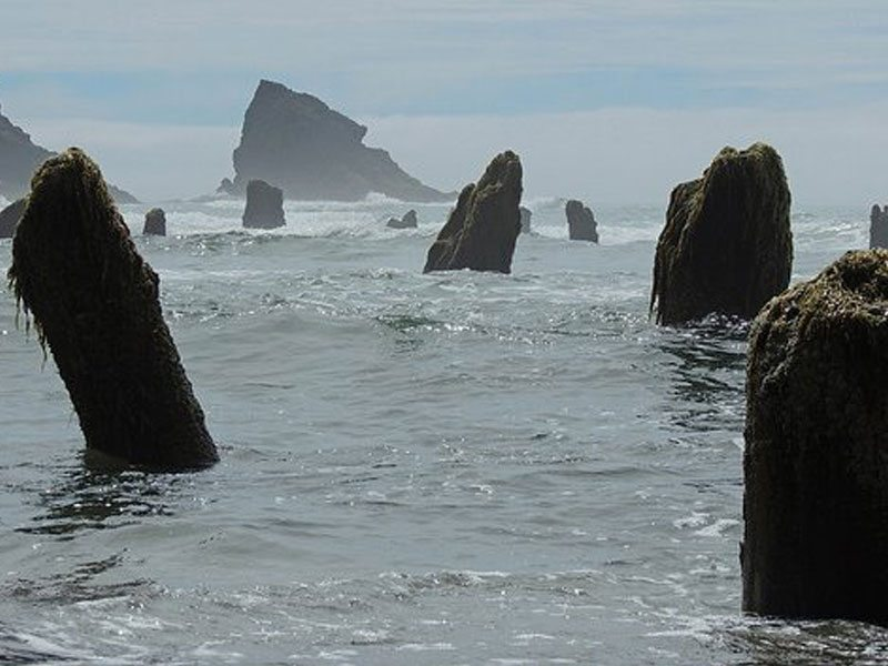 Neskowin Ghost Forest: ancient tree stumps rise out of the ocean at high tide