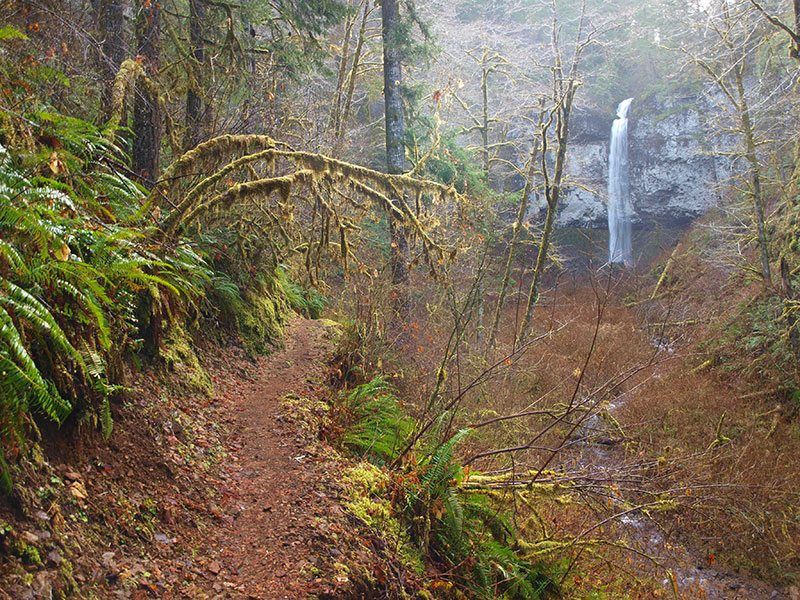 View through the woods of Pheasant Creek Falls in Tillamook County