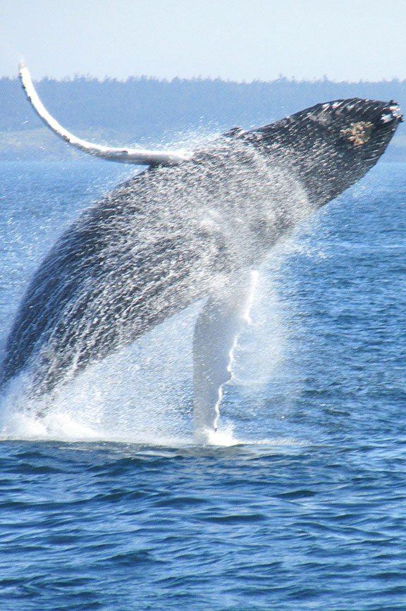 Whale Watching North Oregon Coast Year Round Activity