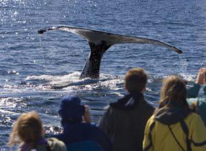 oregon coast whale watching