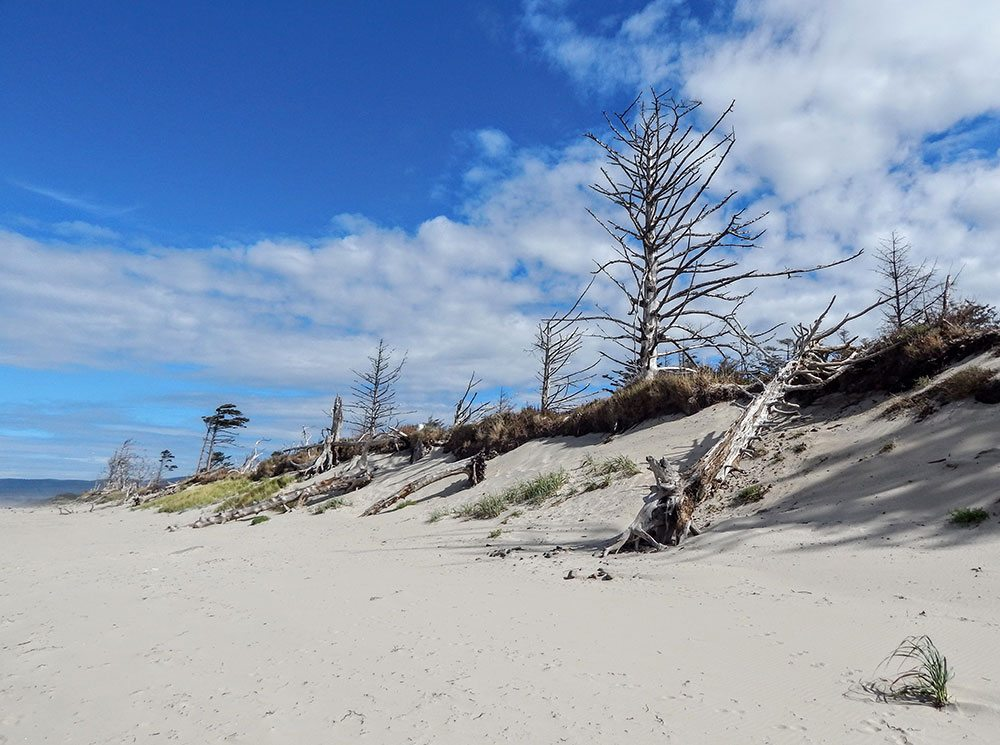 Sandy beaches lead to forest like trails.