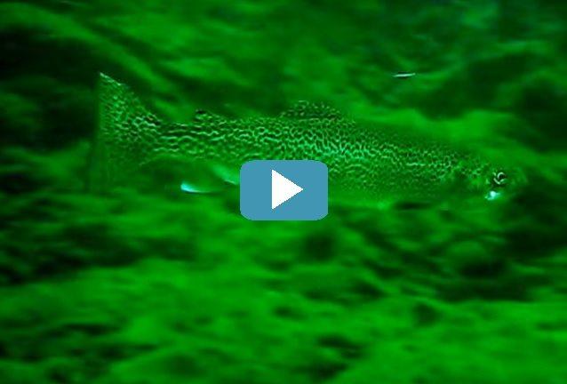 6 Best Places for SCUBA Diving on Oregon's Tillamook Coast