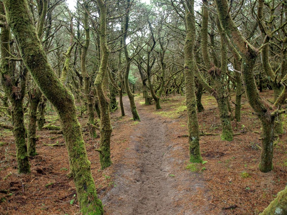 Nestucca-spit-forest-trail
