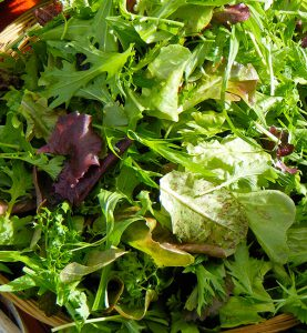 Fresh tender salad greens from Corvus Landing Farm
