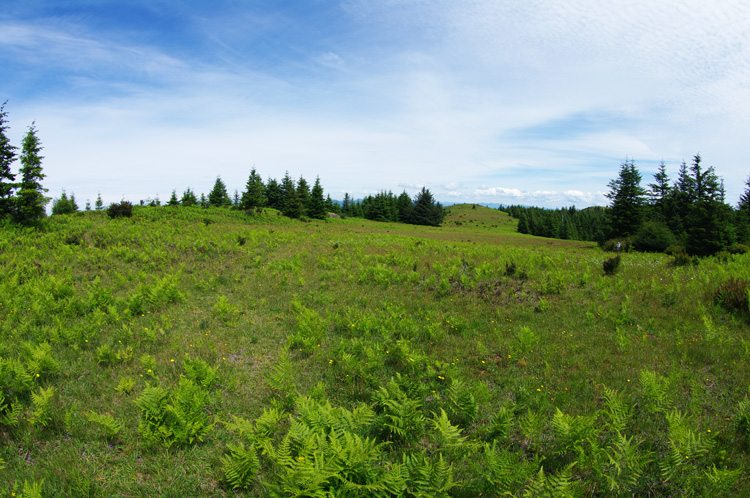 Mt. Hebo meadow