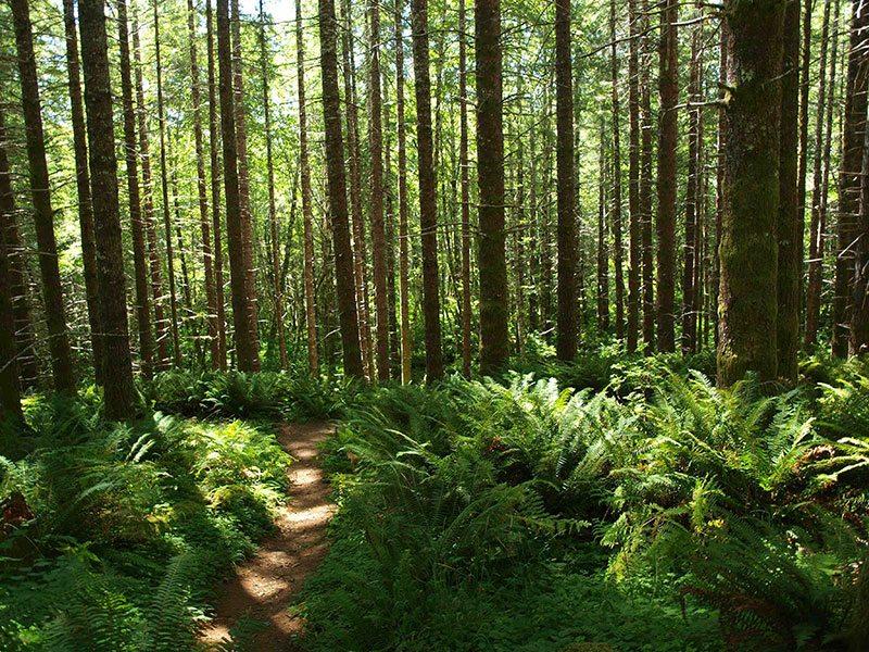 King's Mountain Trail