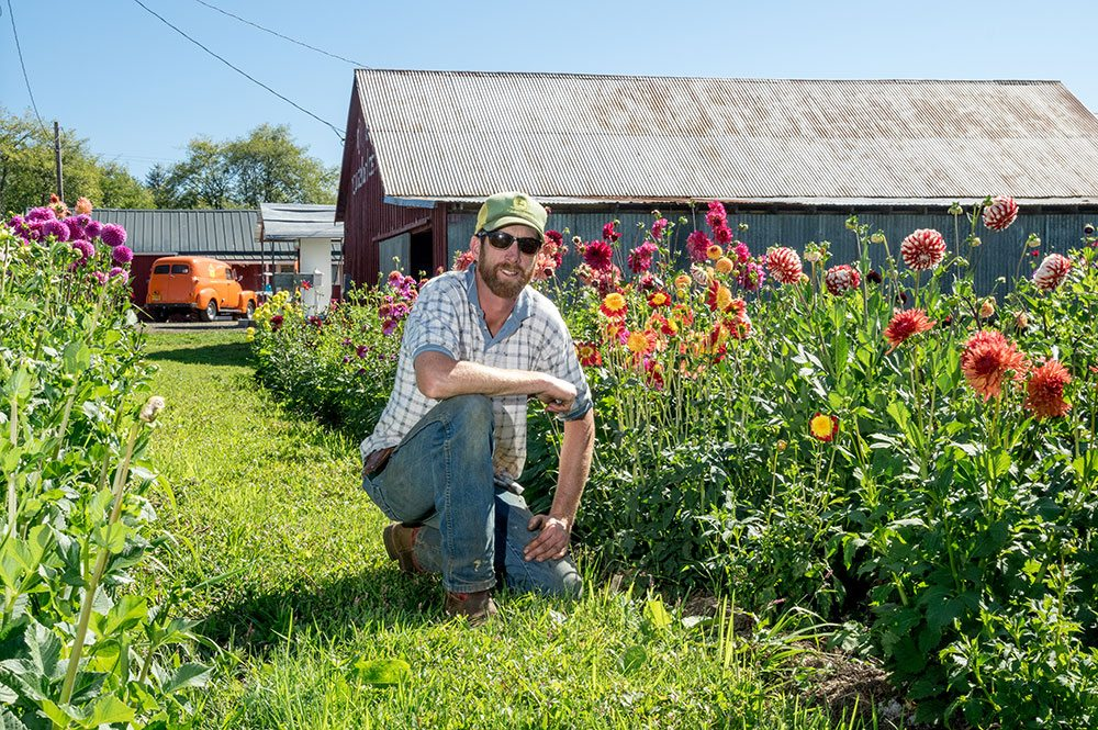 Man kneels in a farm field next to tall dahlias