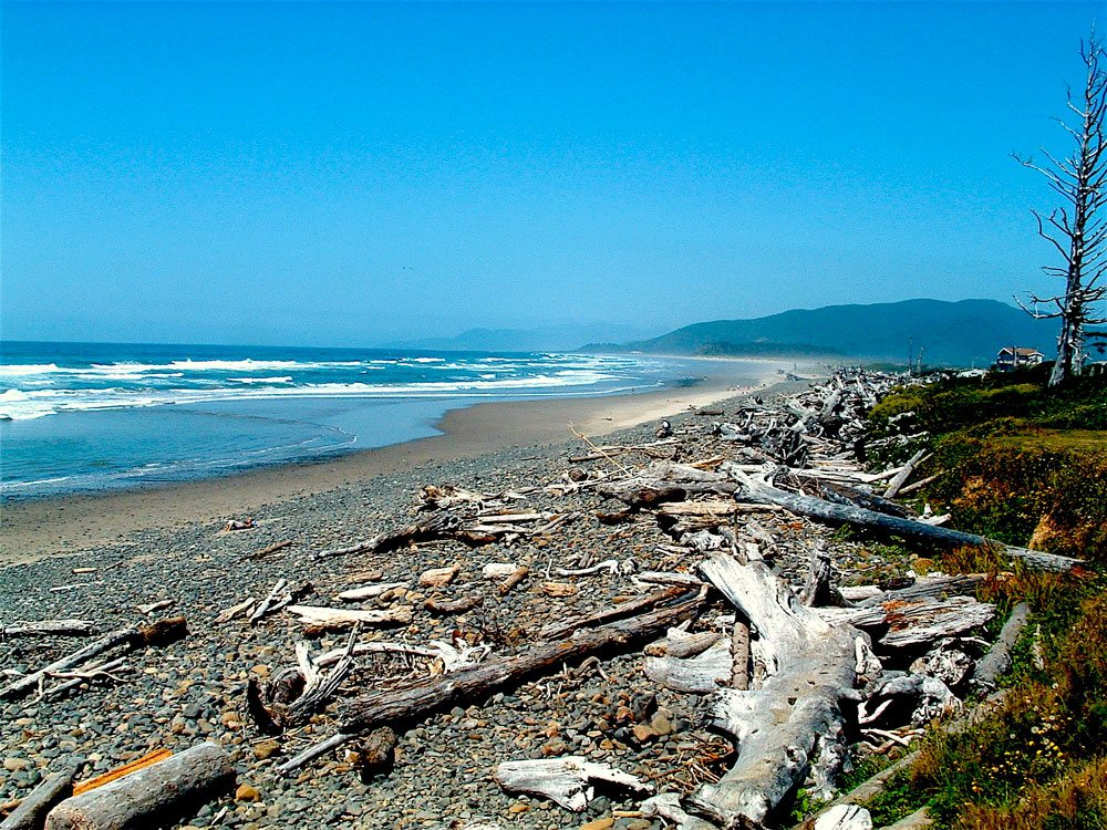 Beach logs at Cape Meares. Thor Steen
