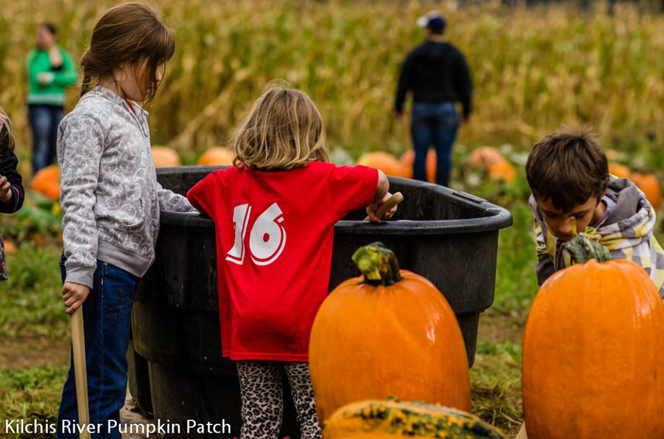 Kilchis Pumpkin Patch