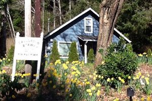 Wooden blue house in the woods with daffodils growing out front