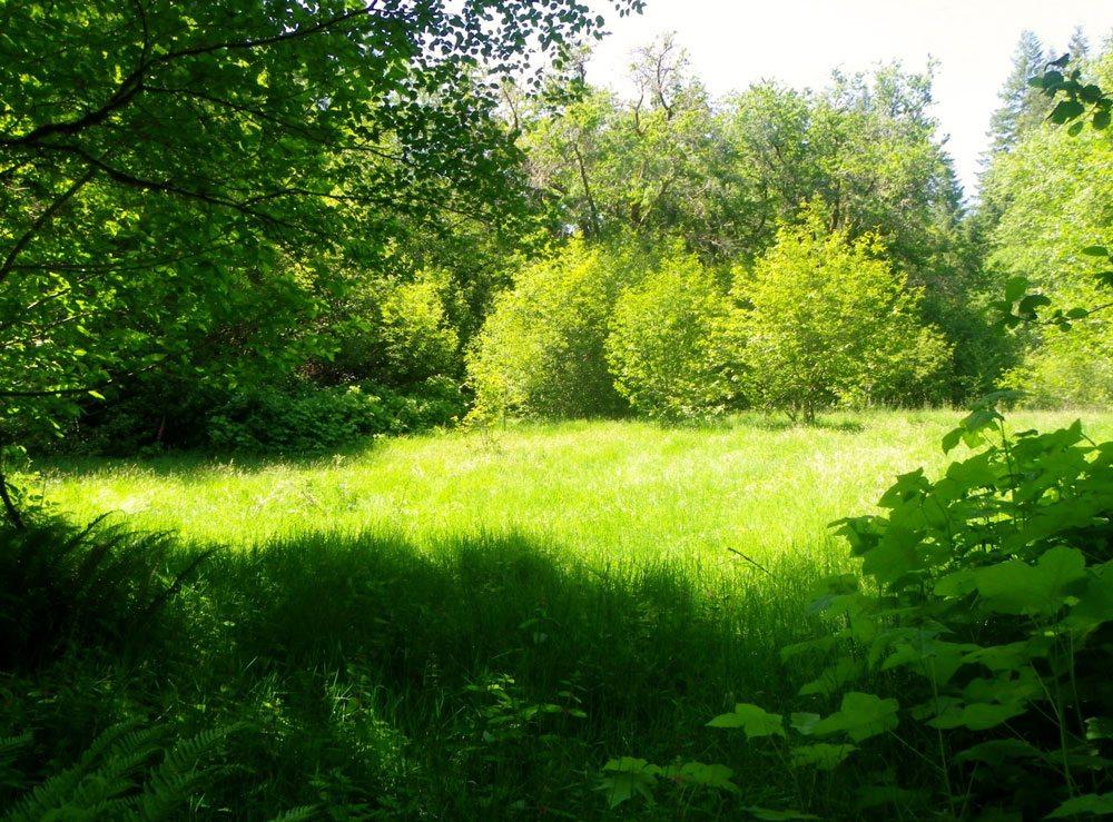 Open meadow. Previous location of Lindgren cabin.