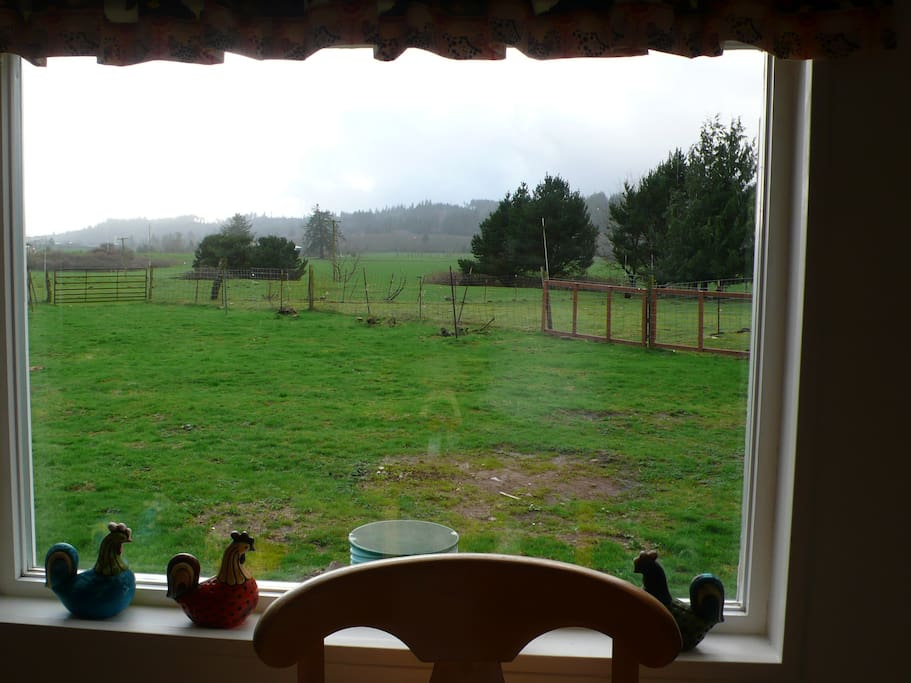Grassy farm seen through a window