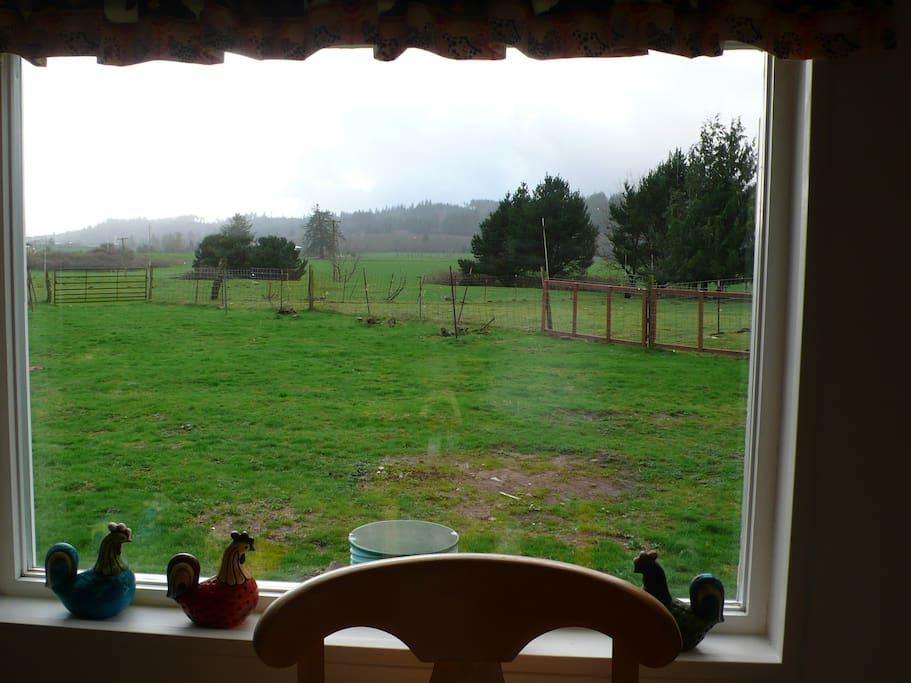 Grassy farm seen through a window