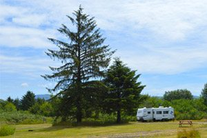 RV parked next to a tall tree near Tillamook Bay