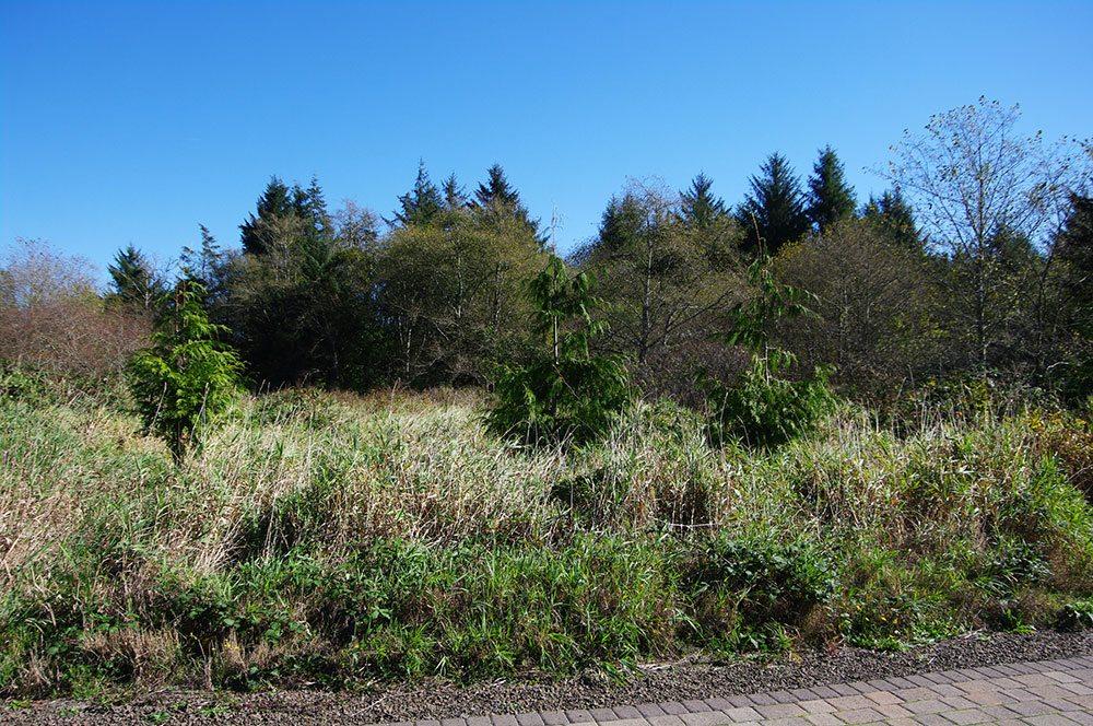 Kilchis Point field