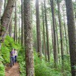 Neahkahnie Trail