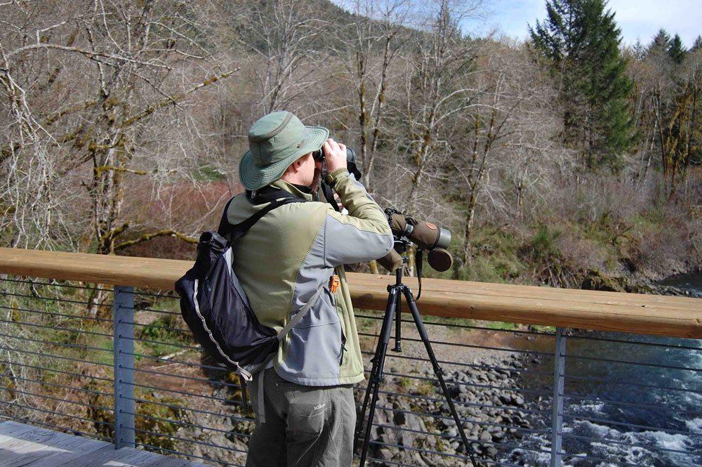 Birdwatching and wildlife viewing