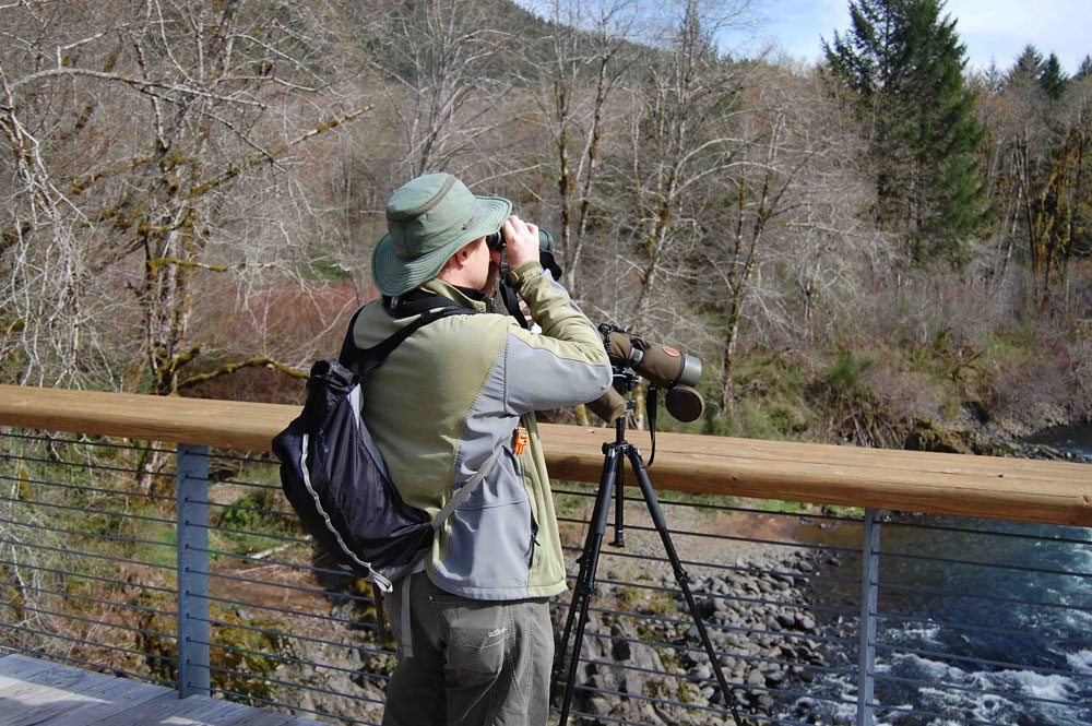 Birdwatching and wildlife viewing