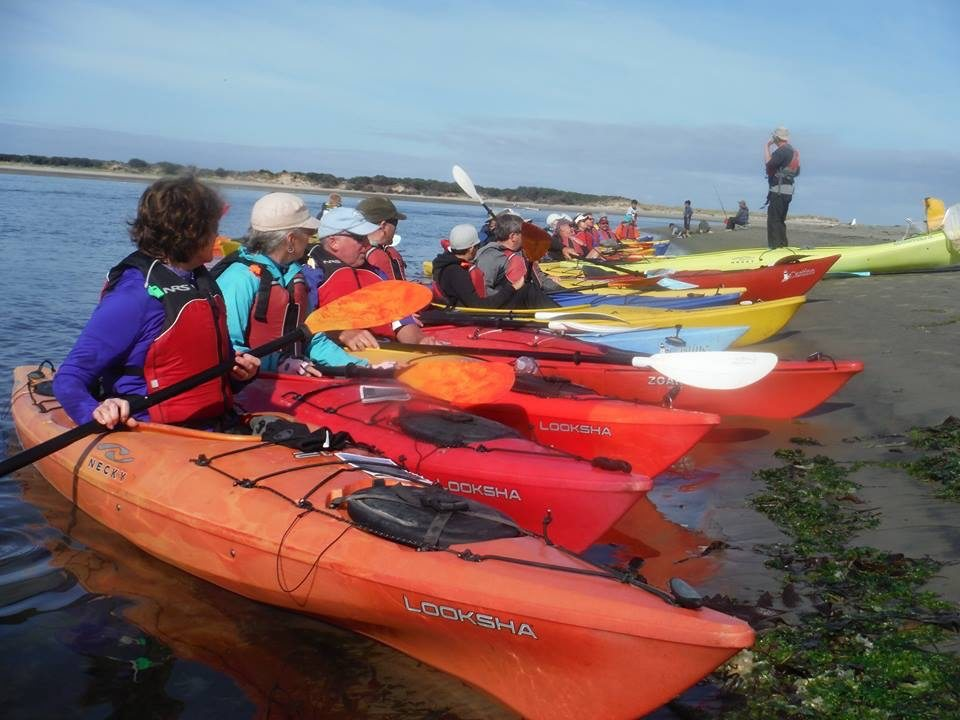 Group of people lined up in single kayaks on the shore