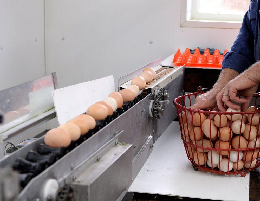 Zweifel Egg Farm