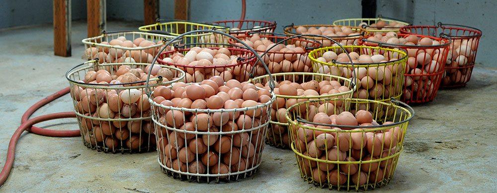 Zweifel Eggs