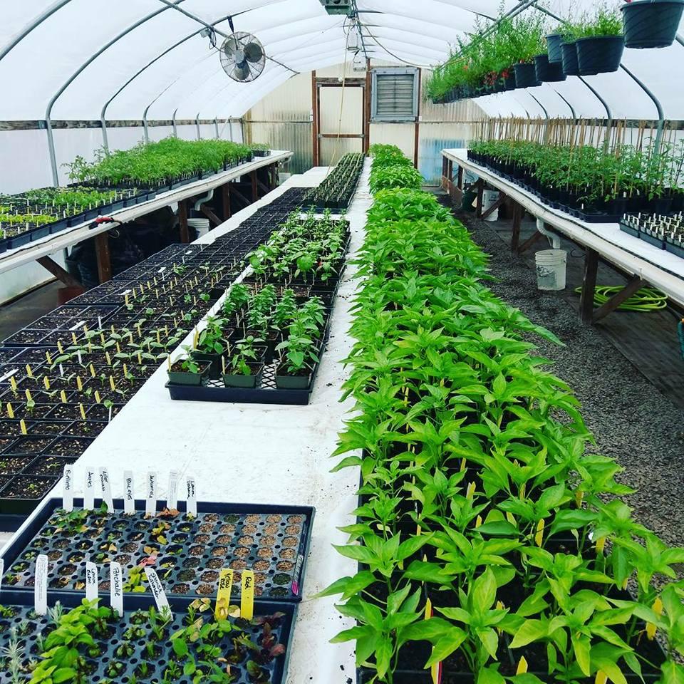 Brickyard Farms