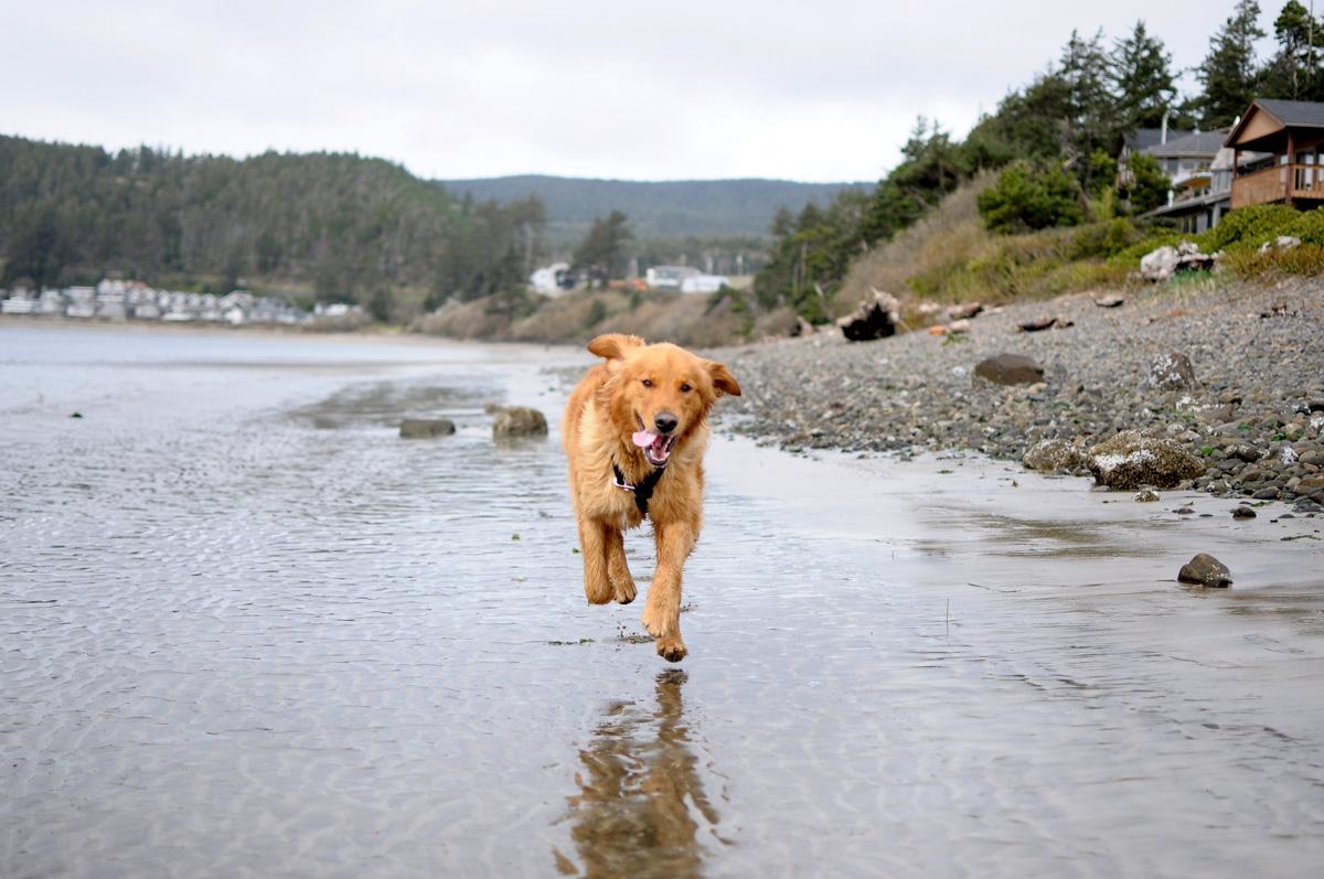 Dog on Oregon beach
