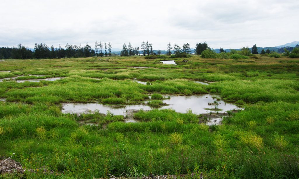 Marsh in the Southern Flow Corridor.