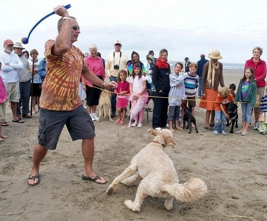 Muttzanita ball toss on beach