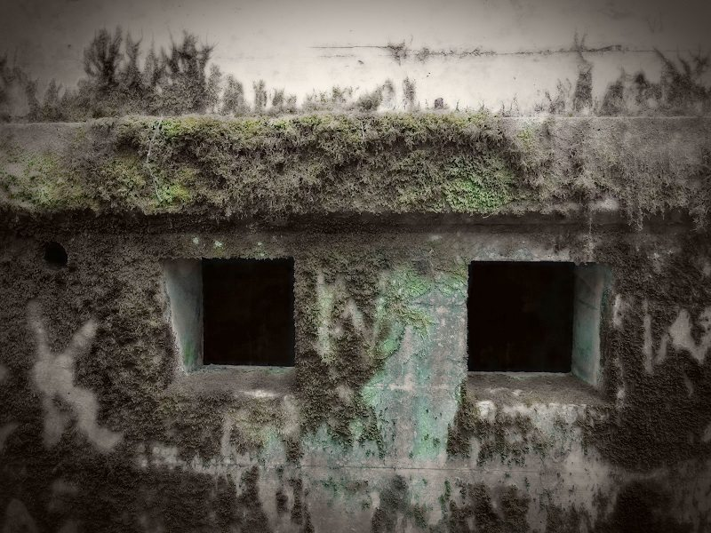 Concrete shelter overgrown with moss