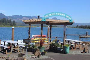 wildlife viewing area
