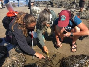 This past summer Friends of Cape Falcon Marine Reserve partnered with other local groups to host a BioBlitz on Neahkahnie Beach DanHaag