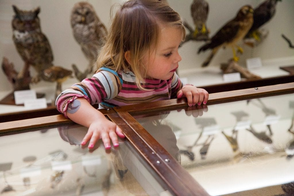 museum birds