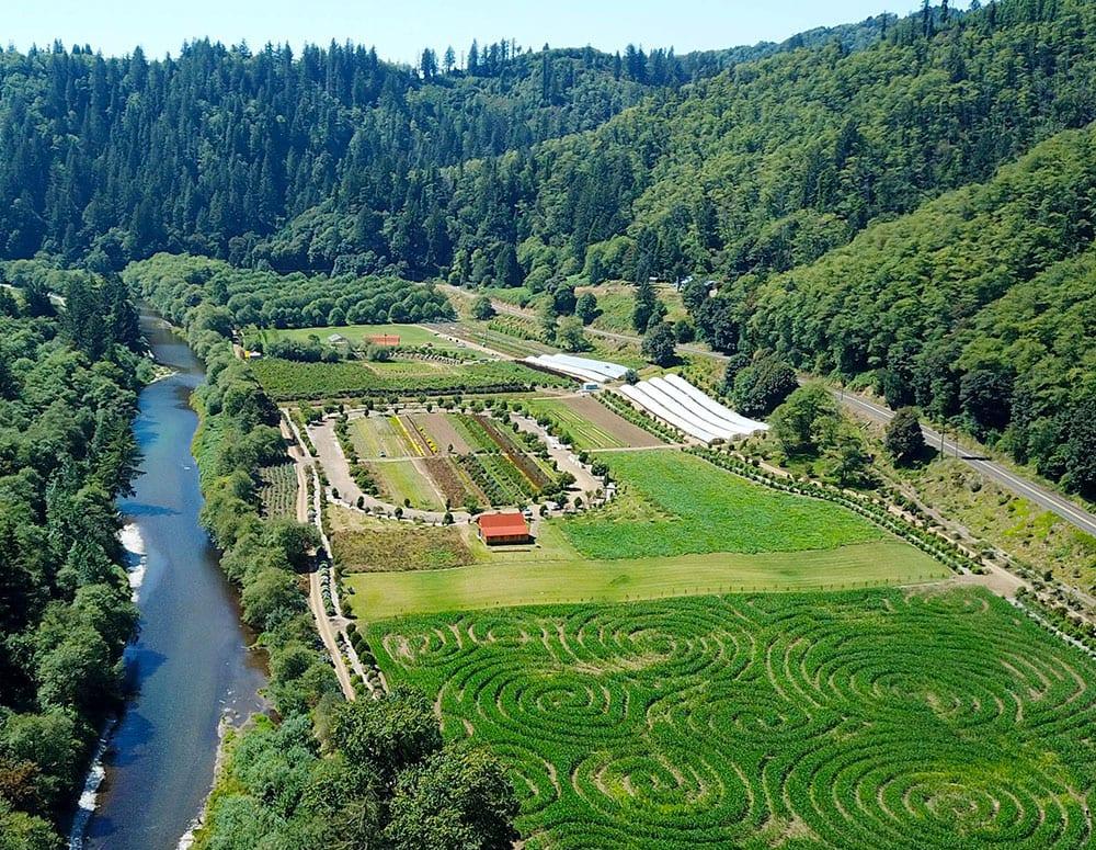 Hydrangea Ranch overhead